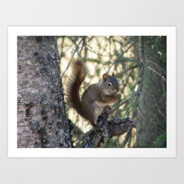 Soldotna Red Squirrel Art Print
