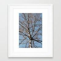 birch Framed Art Prints featuring Birch by Monica Georg-Buller