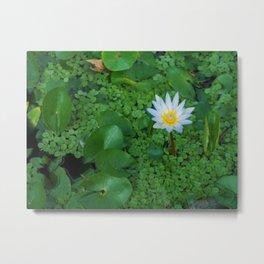 Nymphaea Nouchali Lily Pad Flower in Spring Metal Print