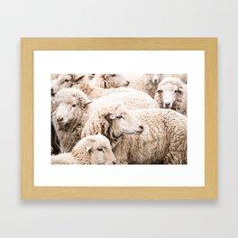 Wall to wall sheep Framed Art Print