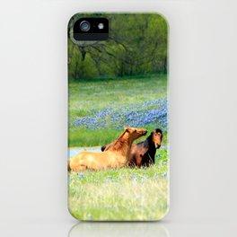 Horses & Bluebonnets iPhone Case