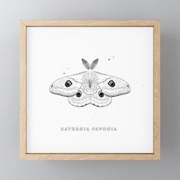 Saturnia Pavonia Framed Mini Art Print
