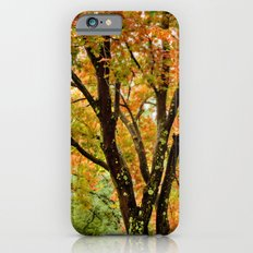 Fall colored tree iPhone 6s Slim Case