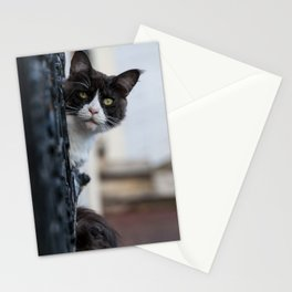 Curious Black and White Cat Stationery Cards
