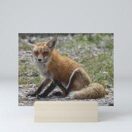Itchy Fox Mini Art Print