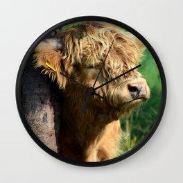 Galloway beef Wall Clock