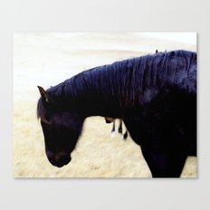 horse in the rain Canvas Print