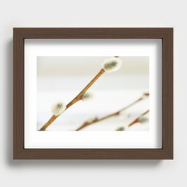 Willow branch with catkins Recessed Framed Print