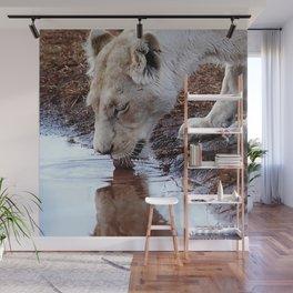 White lion drinking rain water Wall Mural