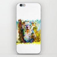 koala iPhone & iPod Skins featuring Koala  by ururuty