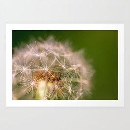 Snowglobe - Macro Photograph of Dandelion Art Print