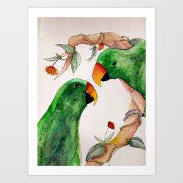 Watercolor Eclectus Parrot Illustration Art Print