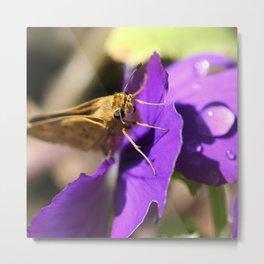 Macro Moth Metal Print