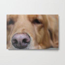 Comet the Dog Metal Print