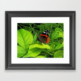 Red Admiral side view Framed Art Print