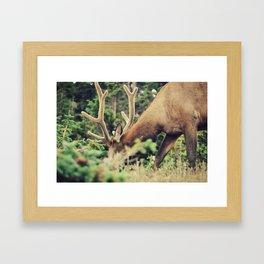Through the Brush Framed Art Print