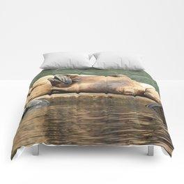 Sleeping Sea Lions Photography Print Comforters