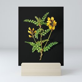 Vintage Calophaca Wolgarica Botanical Illustration on Black (Portrait) Mini Art Print
