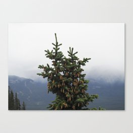 Canadian Spruce Canvas Print