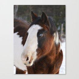 Wolly Talon (horse) Canvas Print