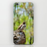 sparrow iPhone & iPod Skins featuring Sparrow by KimberosePhotography