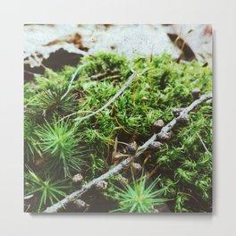 Thorny Greens Metal Print