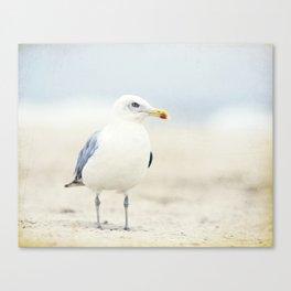Seagull Beach Photography, Coastal Bird Jersey Shore Art, Blue White Seashore Birds Photo Canvas Print
