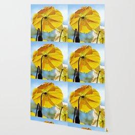 Poppy in Backlight II Wallpaper