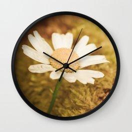 Daisy nature Wall Clock