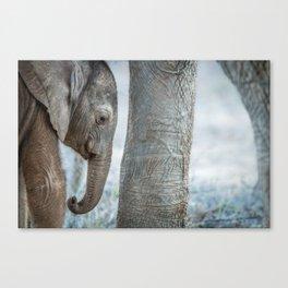 Sleepy baby Elephant Canvas Print
