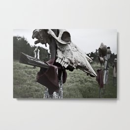 Cowhead Metal Print
