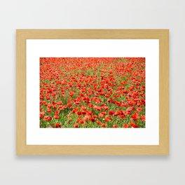 Blooming poppy field Framed Art Print