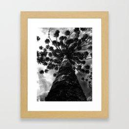 araucaria Framed Art Print