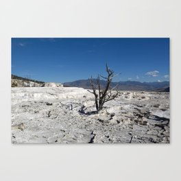 Single dead tree in natural mineral stone Canvas Print