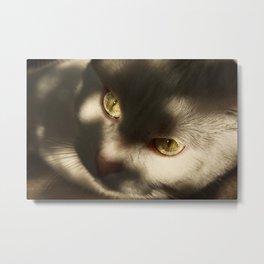 cateyes Metal Print