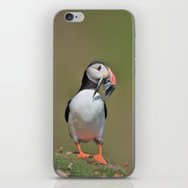 Puffin with full beak of Sand eels fish iPhone Skin