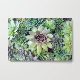 Succulent Garden II Metal Print