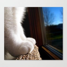 Fuzzy Feet Canvas Print