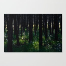 Parallel Forest Canvas Print
