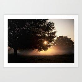 sunrise through the live oak Art Print