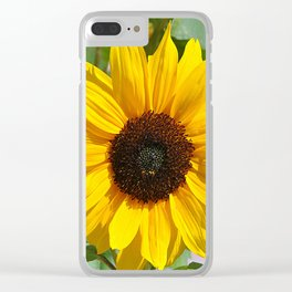 Sunflower nature photo Clear iPhone Case