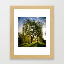 Golden willow Framed Art Print