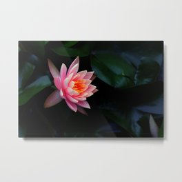 Birth of Beauty Metal Print