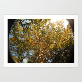 oh, fall Art Print