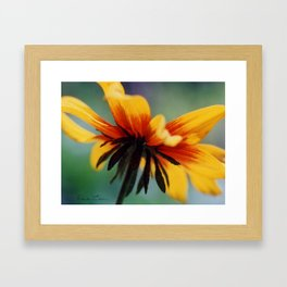 Bee's Eye view of a Black-eyed Susan Framed Art Print