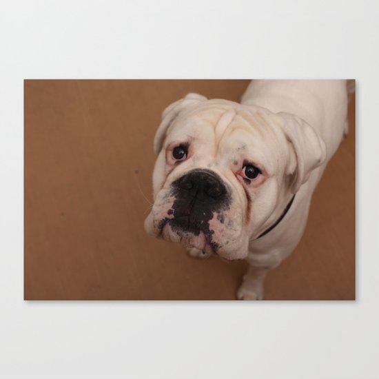 My dog Konstantin Canvas Print