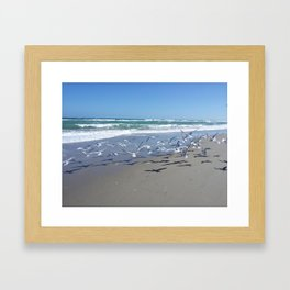 Seagulls Galore  Framed Art Print