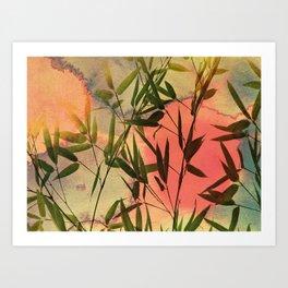 sunset bamboo Art Print