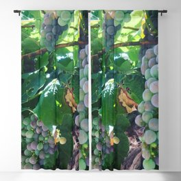 Grapes on the Vine Blackout Curtain