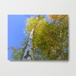 Toward the blue sky Metal Print